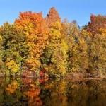 Fall foliage thumb