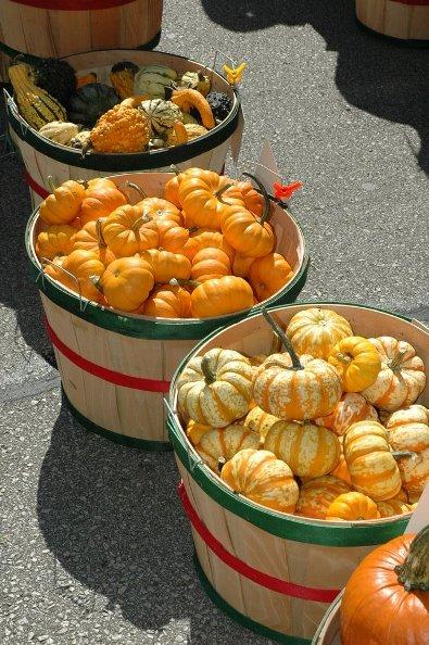Autumn Farmers Market in Wisconsin
