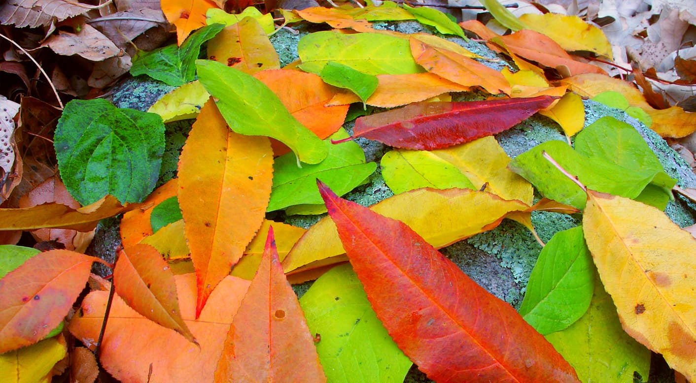 See the fall foliage