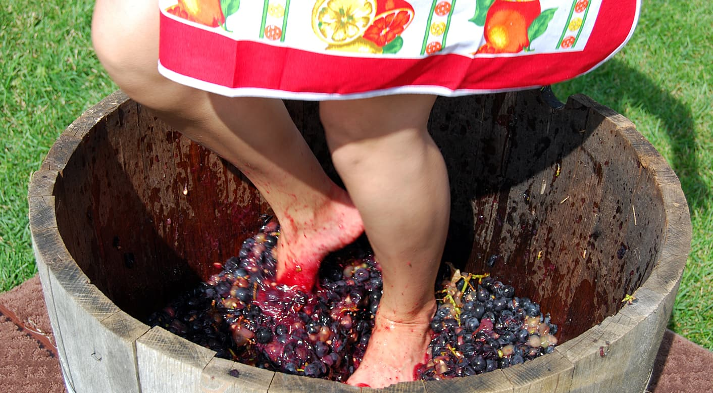 Have fun stomping grapes